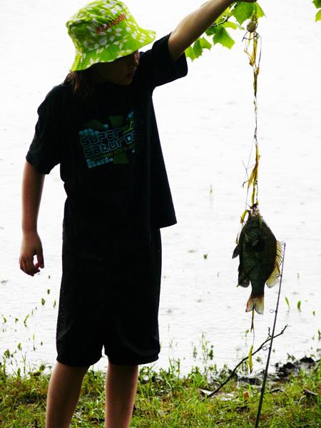 Cami fish